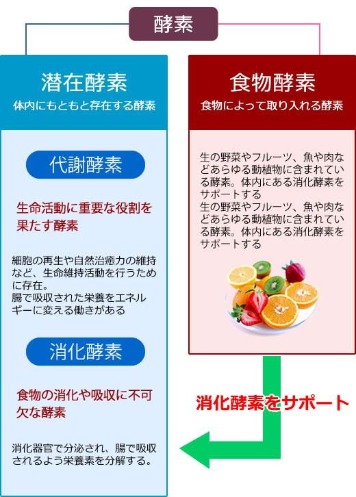 酵素と栄養素